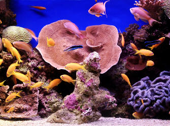A real aquarium . . . not the DS version! Sadly.