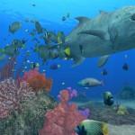 Endless Ocean 2 fish wallpaper