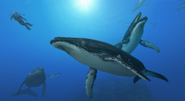 Endless Ocean 2 Whales wallpaper