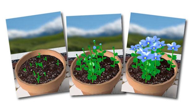 Flower Garden IPhone Screenshots